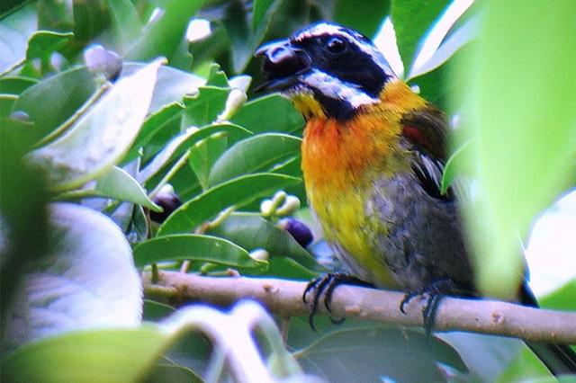 Bird watching. Excursion from Hostal Aliana, Santa Clara, Villa Clara Cuba